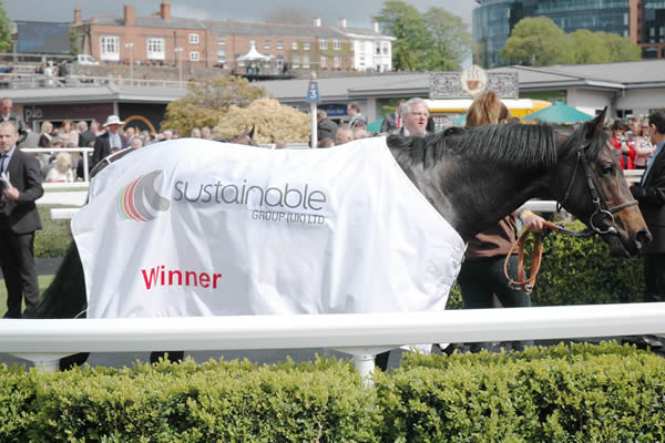 A racehorse in the winner's enclosure, wearing the Sustainable logo.