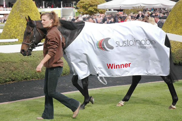 Sustainable Group - race sponsor. A racehorse with the Sustainable Group logo.